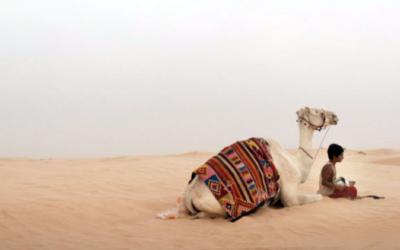 The Camel Boy – L' Enfant Chameau